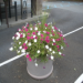 Pot of Petunias Pink
